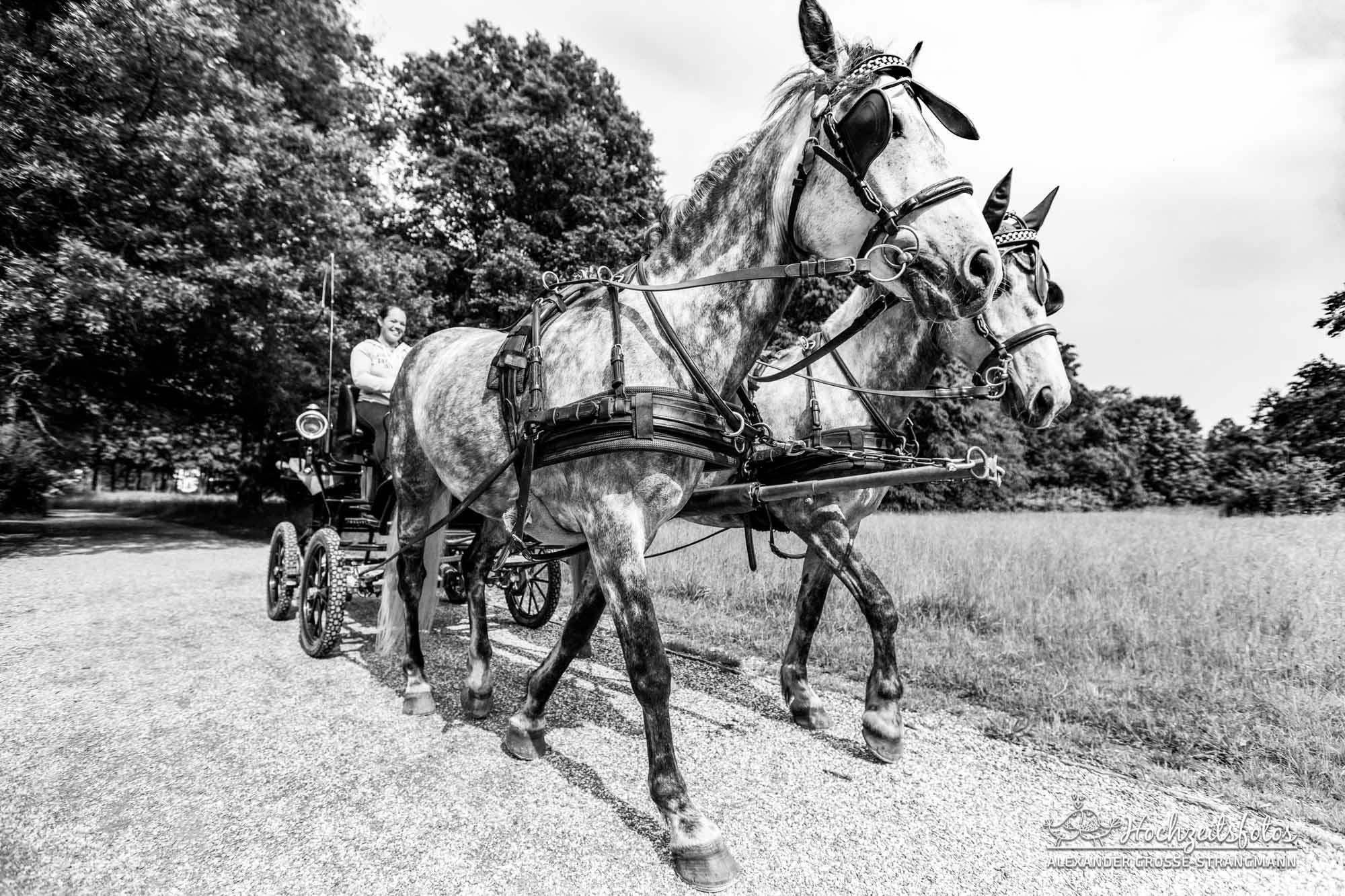 Hochzeitsreportage Hannover Hochzeitsfotograf Herrenhaueser Gaerten Grosser Garten 68